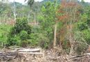 Côte d'Ivoire: des ONG alertent sur le sort de la forêt du Cavally