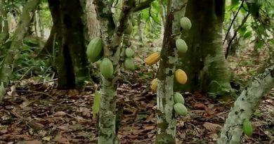 Une virée à la plantation