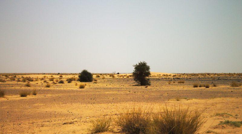 Sahel : un « plan d'investissement climatique » de 400 milliards de dollars