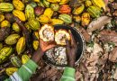 Côte d'Ivoire : les cabosses de cacao transformées en biocharbon