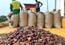 """Cacao ivoirien: une """"grève illimitée"""" contre le blocage de la commercialisation annoncée"""