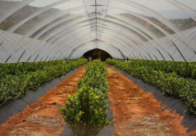 Nigeria : un supermarché d'agriculture biologique à Abuja